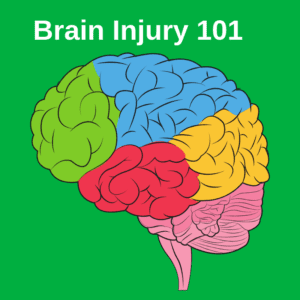 Brain Injury 101 - Image of different parts of the brain